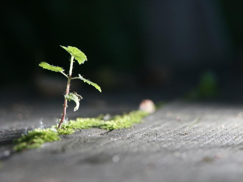 Minibaum im Riesenblitz