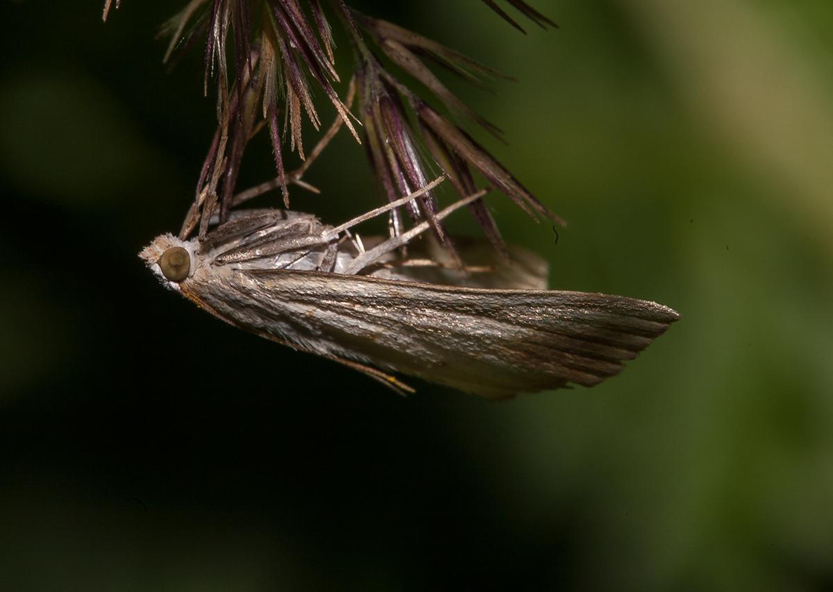 Minifalter am Zweig