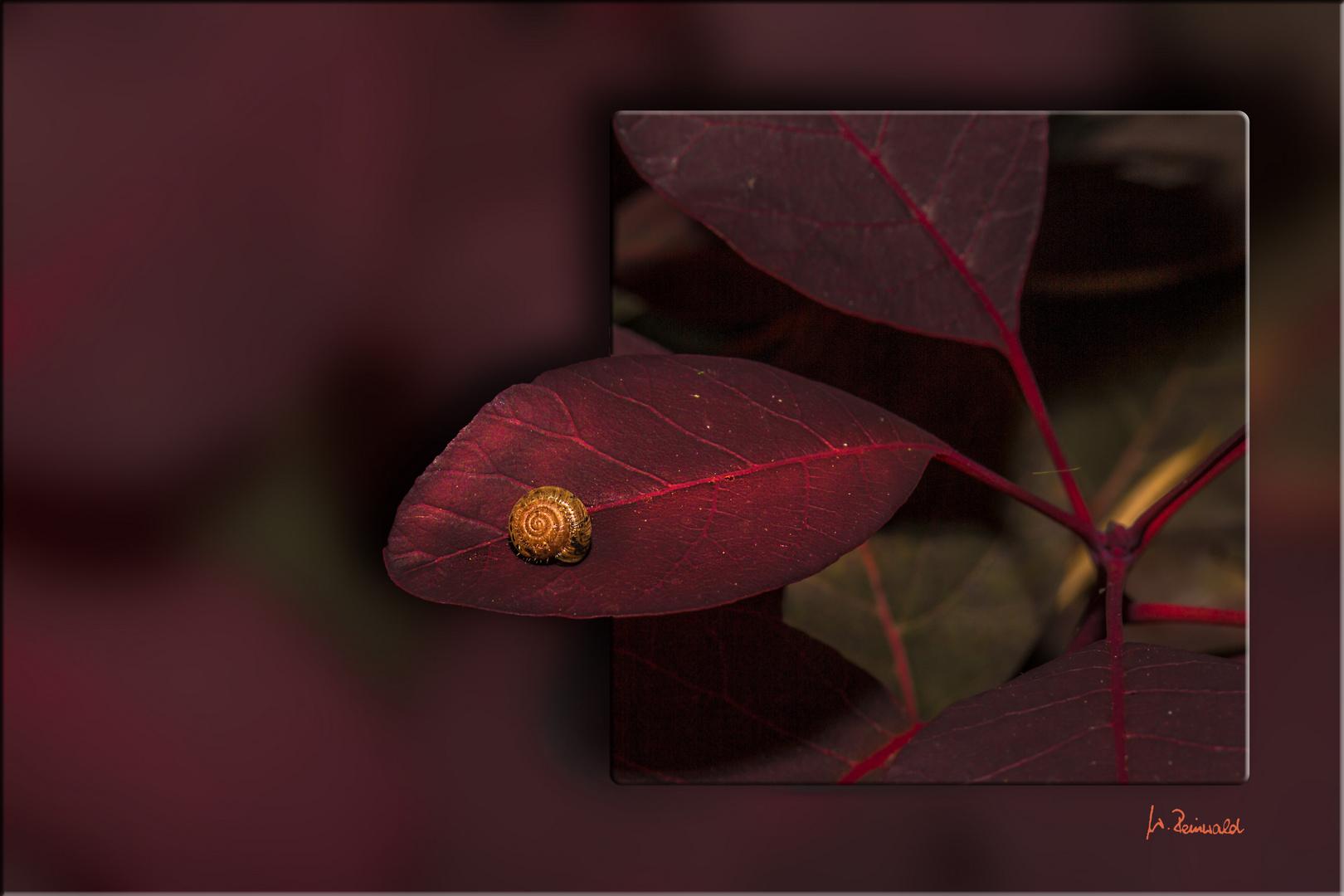 Minischnecklein auf Perückenstrauchblatt