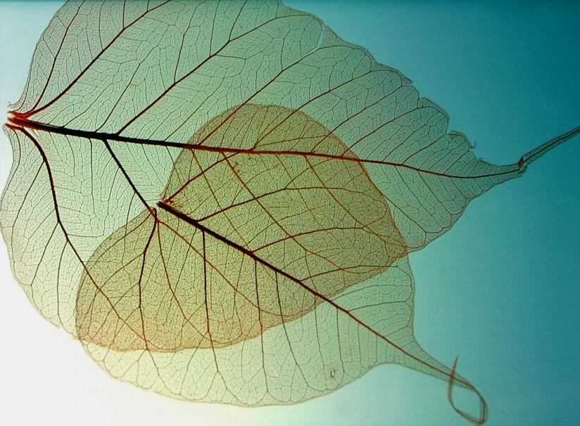 Miniserie Herbstblätter (5/5)