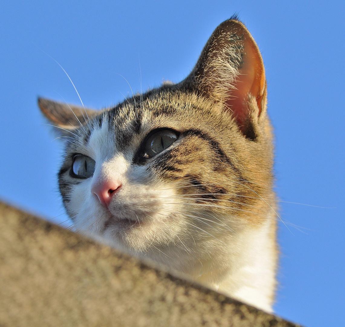 Minka auf dem Dach