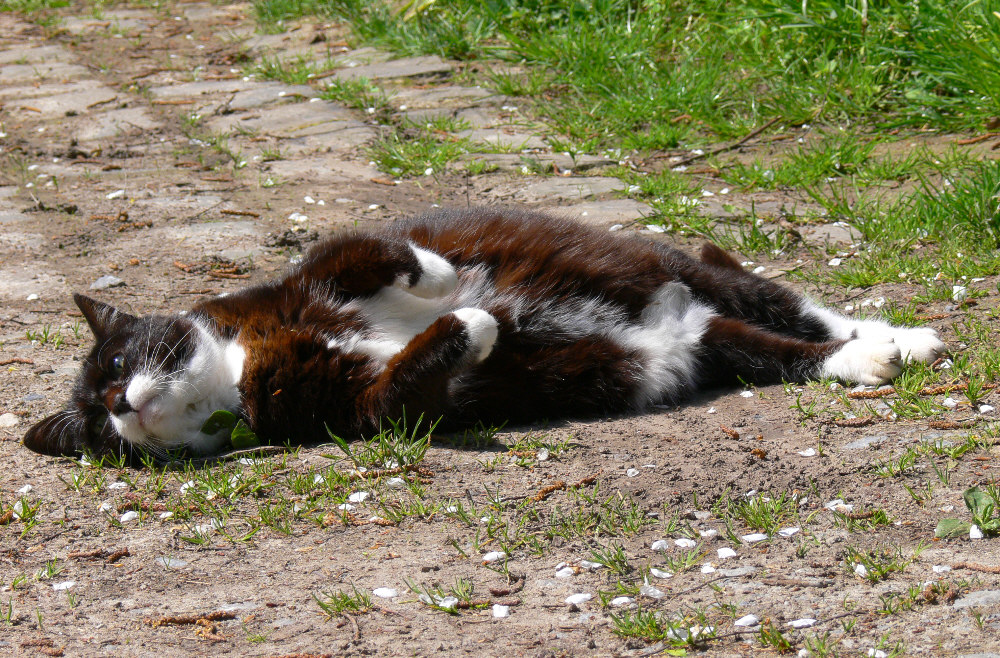 Minni nimmt ein Sonnenbad