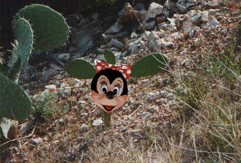 Minnie Kaktus