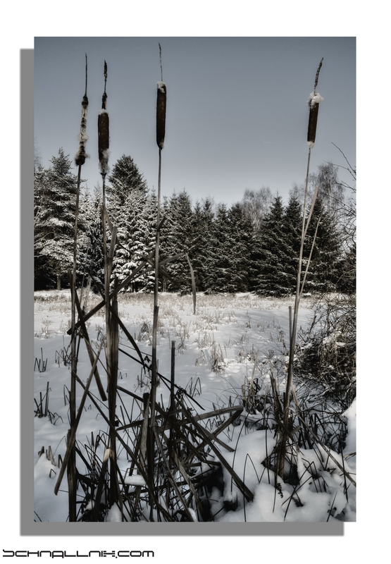 minus 14°