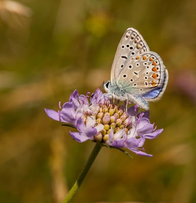 Minute Papillon ...