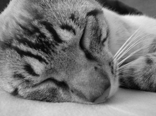 Mio´s Sleep
