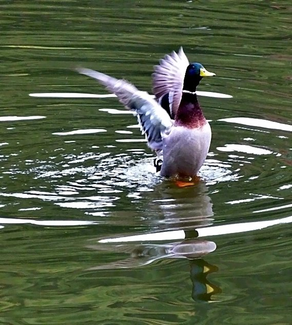 Mir geht's gut in meinem Teich!