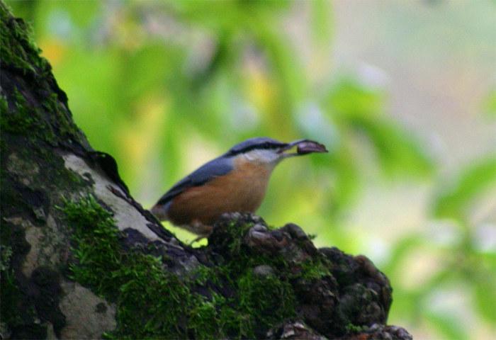 Mir unbekannter Vogel