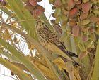Mir unbekannter Vogel im Egypten