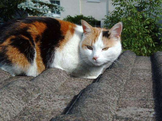 Mira auf dem Dach