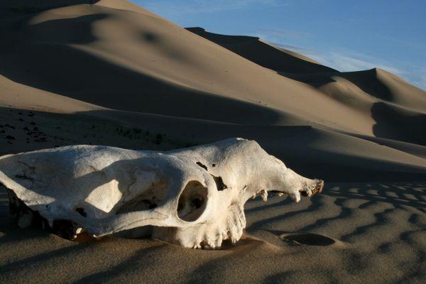 mirada al desierto