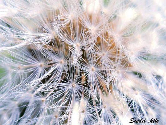 mirada profunda hacia el centro de una semilla