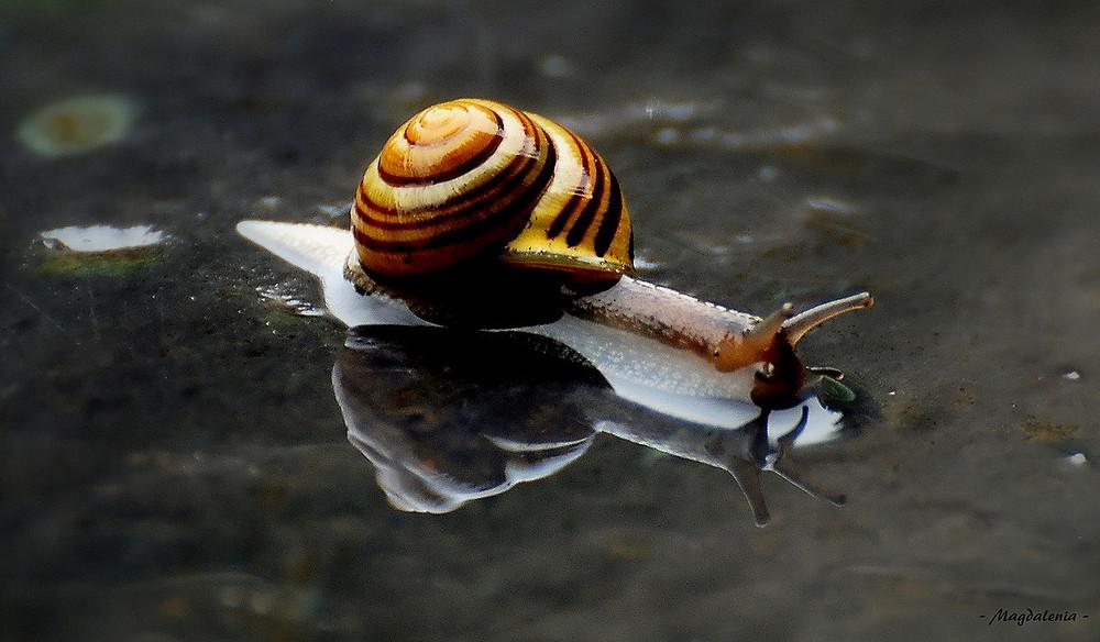 """""""Miroir d'escargot"""""""