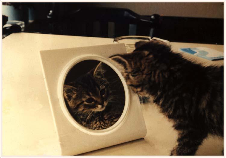 Miroir, Miroir.......