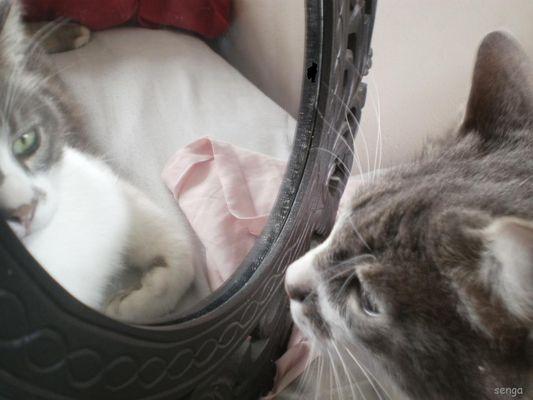 miroir, mon beau miroir, dit moi que je suis le plus beau