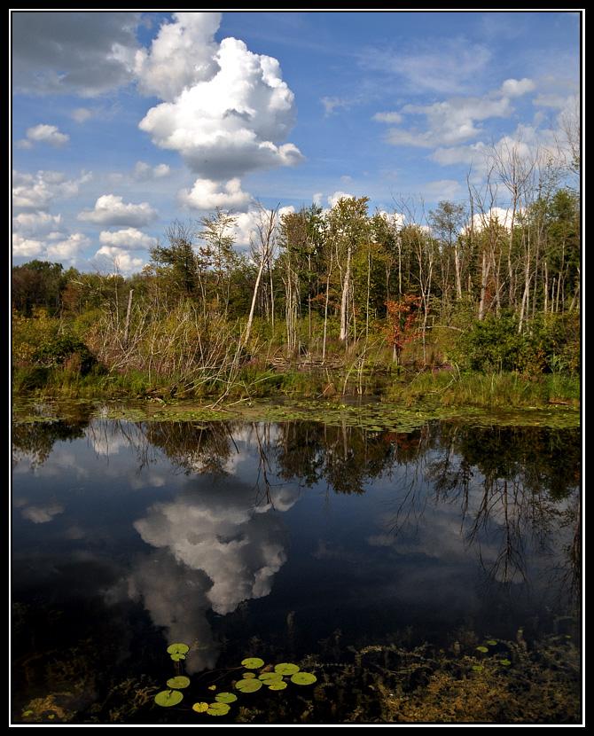 Mirrored Wetlands