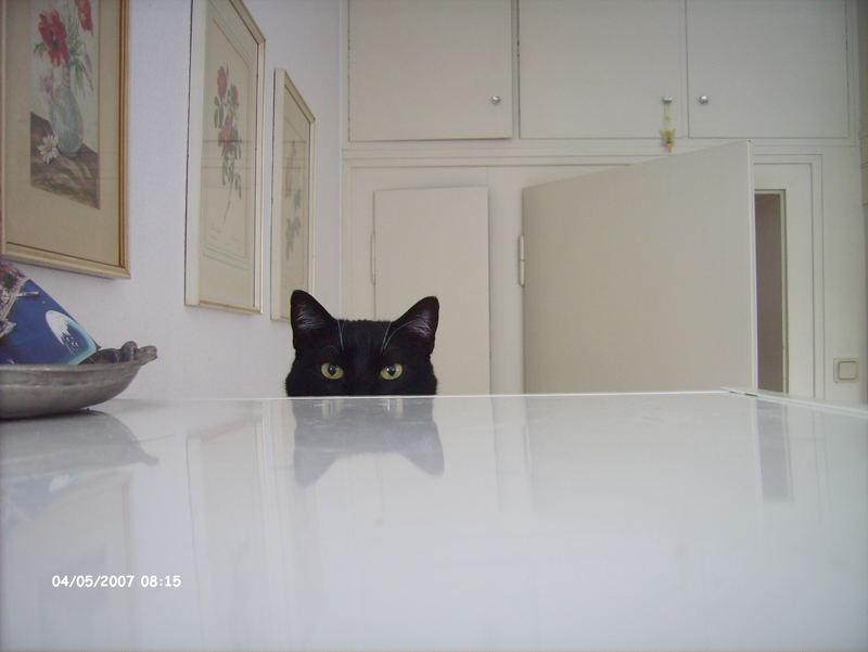 Mirroring Cat