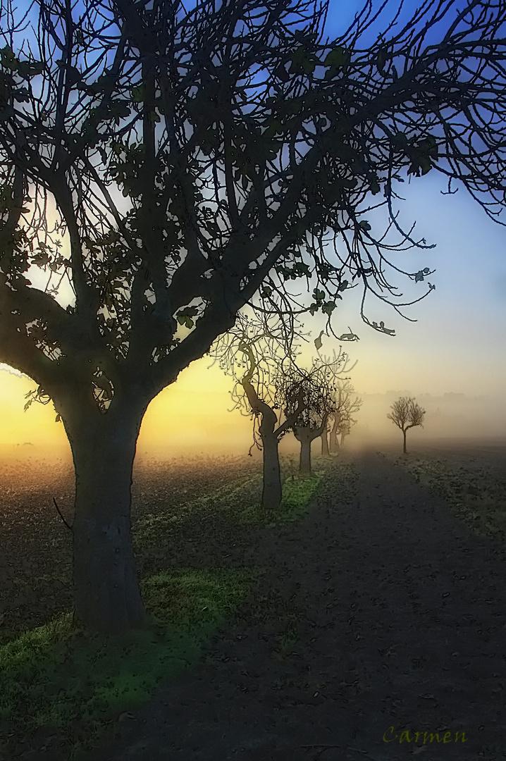 Mis paseos...cuando sale el sol