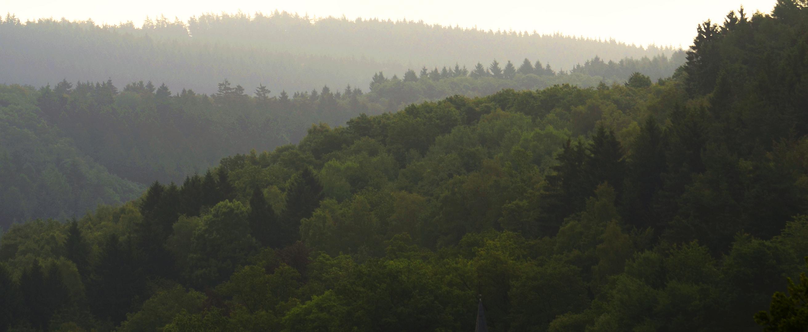 Mischwald auf Hügeln des Sauerlandes