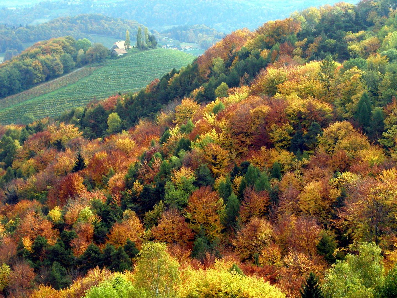 Mischwald Foto Amp Bild Landschaft Wald Natur Bilder Auf