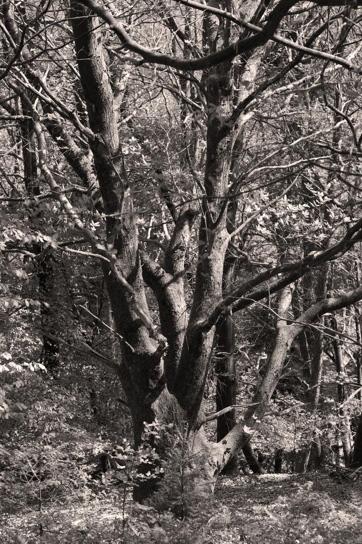 Mischwald im Frühling
