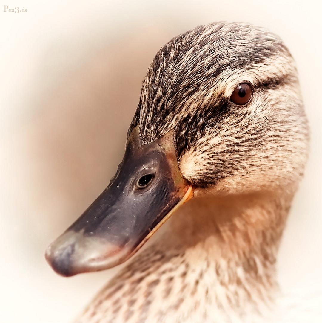 Miss Duck