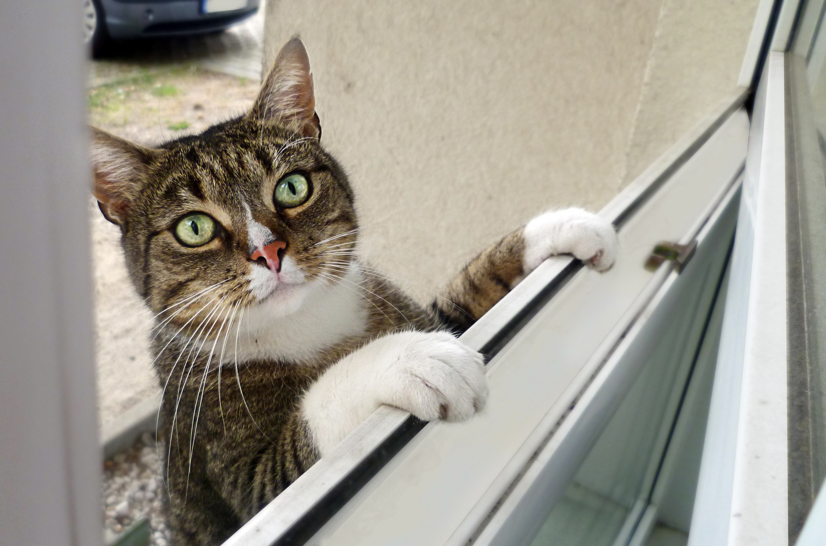 Miss Kitty zu Besuch