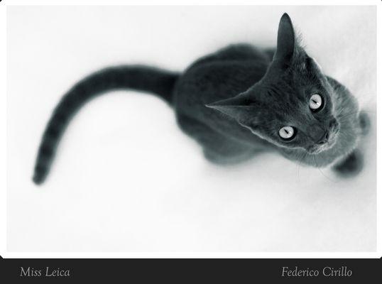 Miss Leica