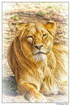 Miss Lion