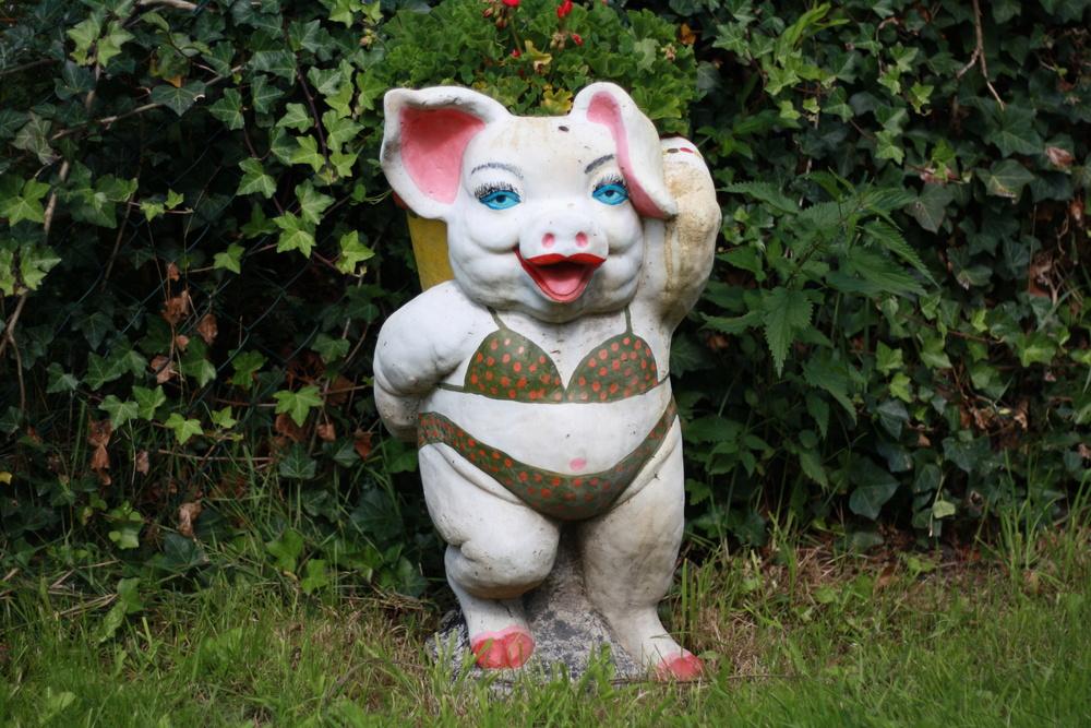 MISS PIG 1