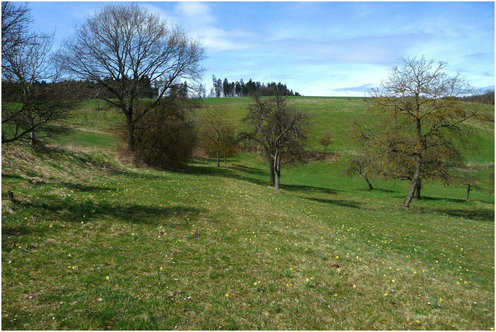 Misselblumenwiese in Misselberg bei Nassau/Lahn