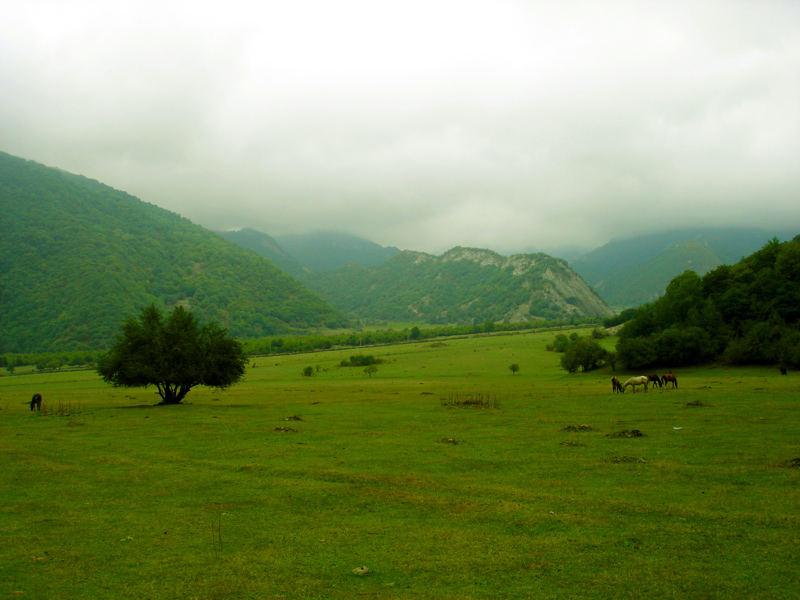 Mistic field