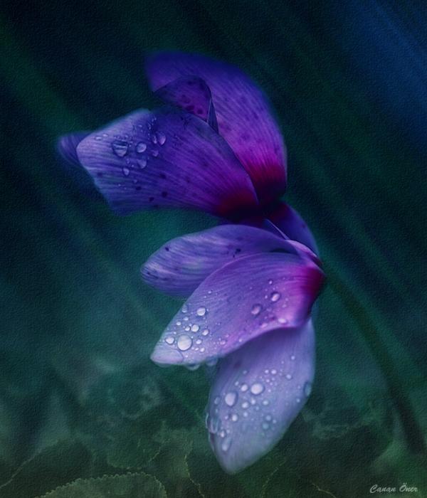Misty Blue.....