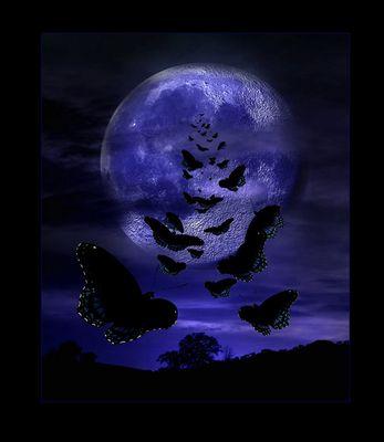 Misty Moon Light