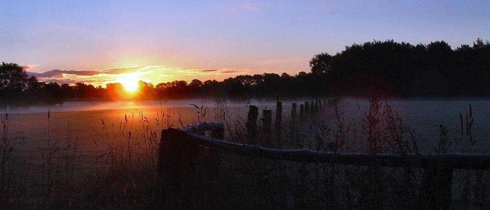 Misty morning von Andrea Werner