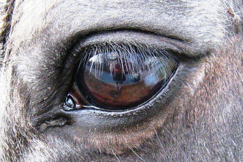 mit anderen Augen