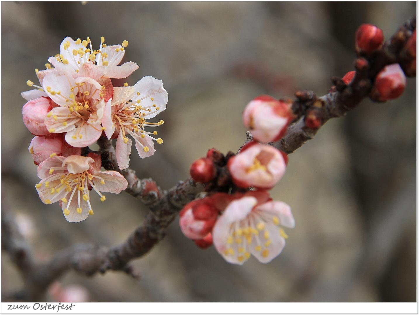 mit blühenden Obstbäumen
