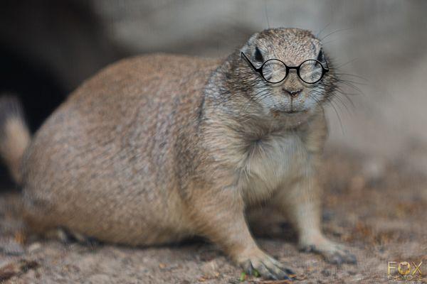 Mit Brille...