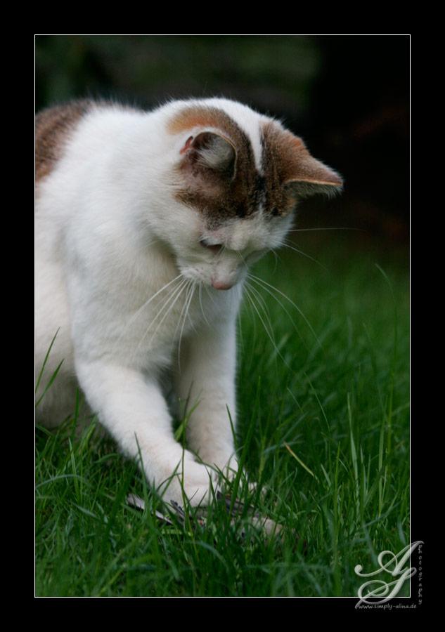 Mit dem Essen spielen dürfen nur Katzen