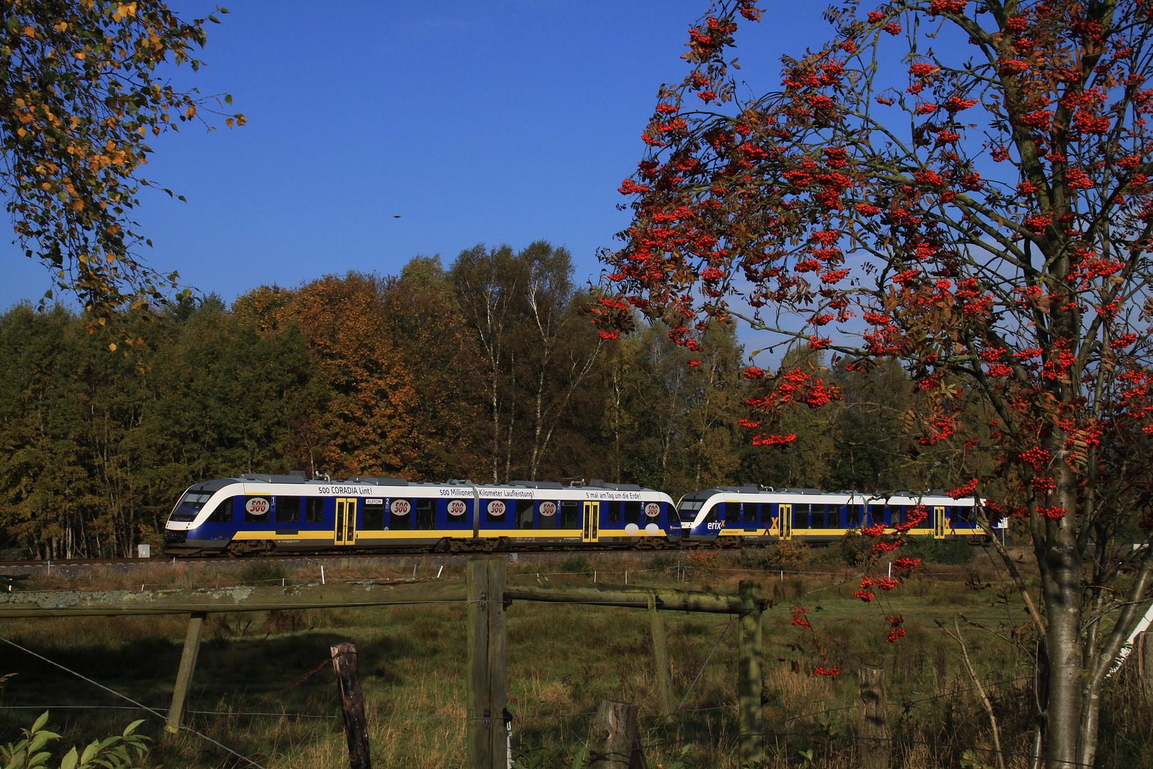 """Mit dem """"Heidesprinter"""" erixx im Herbst 2013 auf der Heidebahn"""