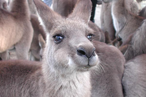 mit dem Kangoroo auf du und du