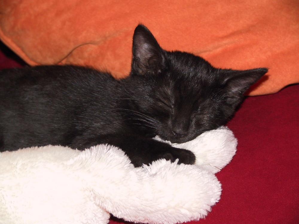 mit dem Stofftier schläft die Paula am liebsten