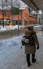 Mit den Hunden im Winter spazieren gehen