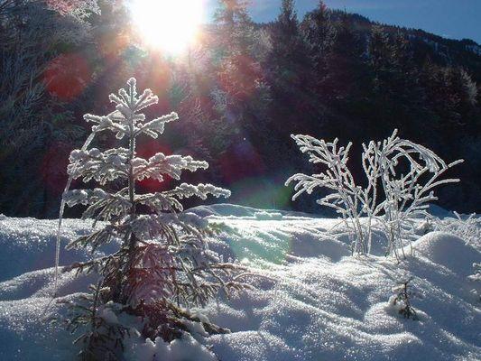 mit den knien im schnee
