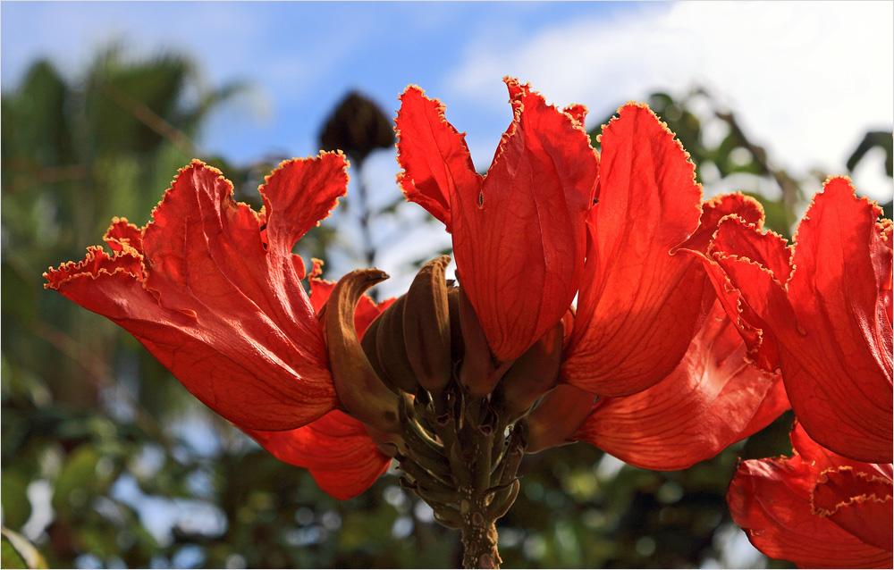 mit der Blühte eines Tulpenbaumes....