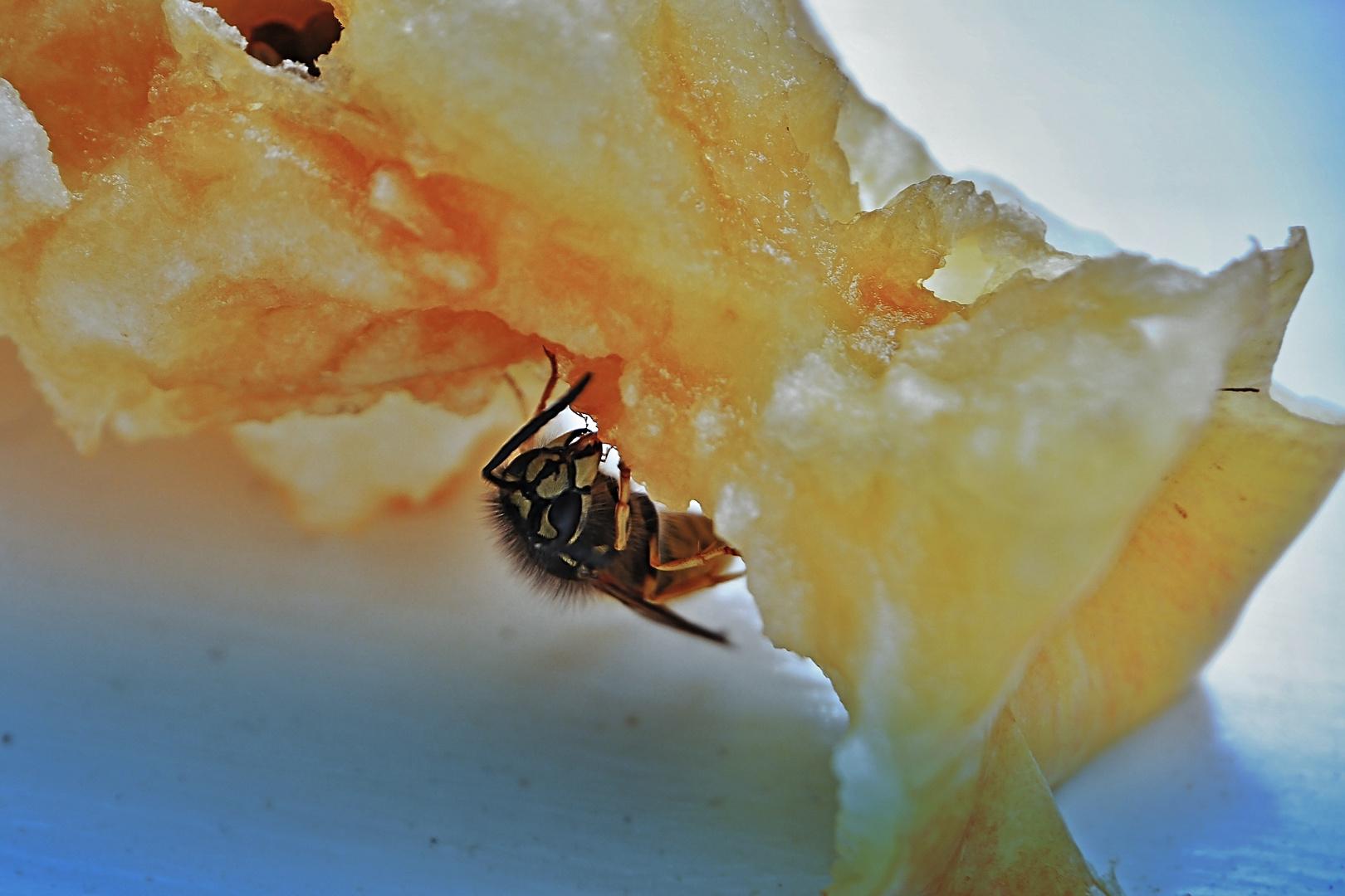 mit der Wespe im Apfel
