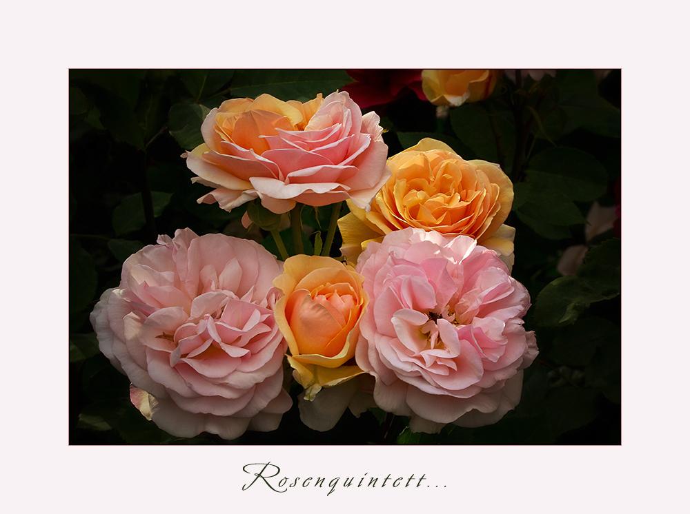 Mit diesem Quintett aus meinem Garten....
