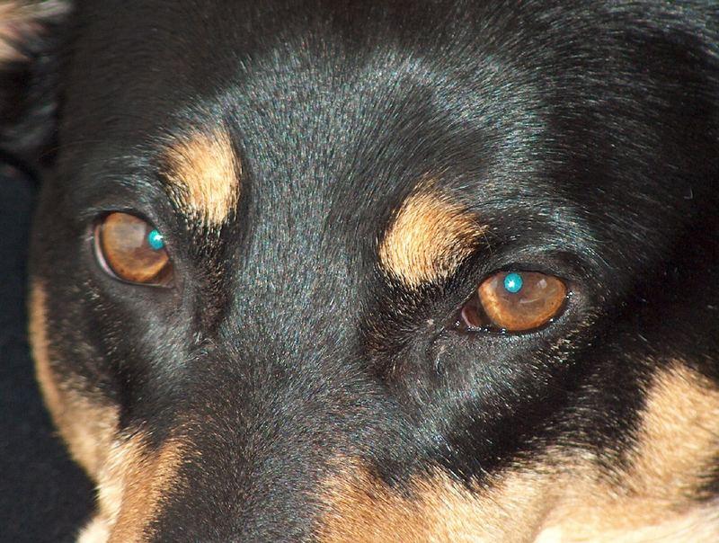 Mit diesen Augen...