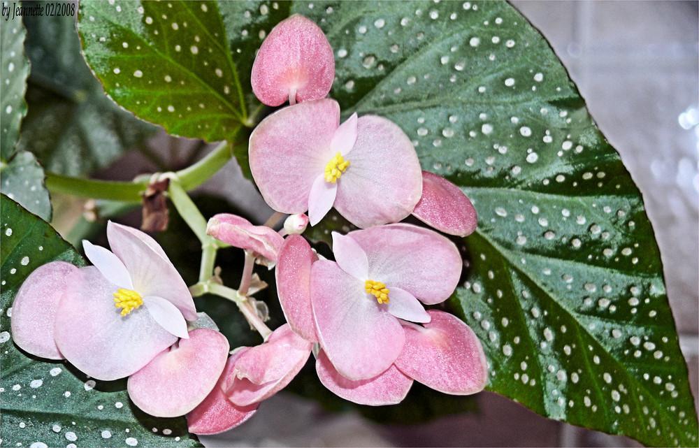 Mit diesen Blütengruß .....