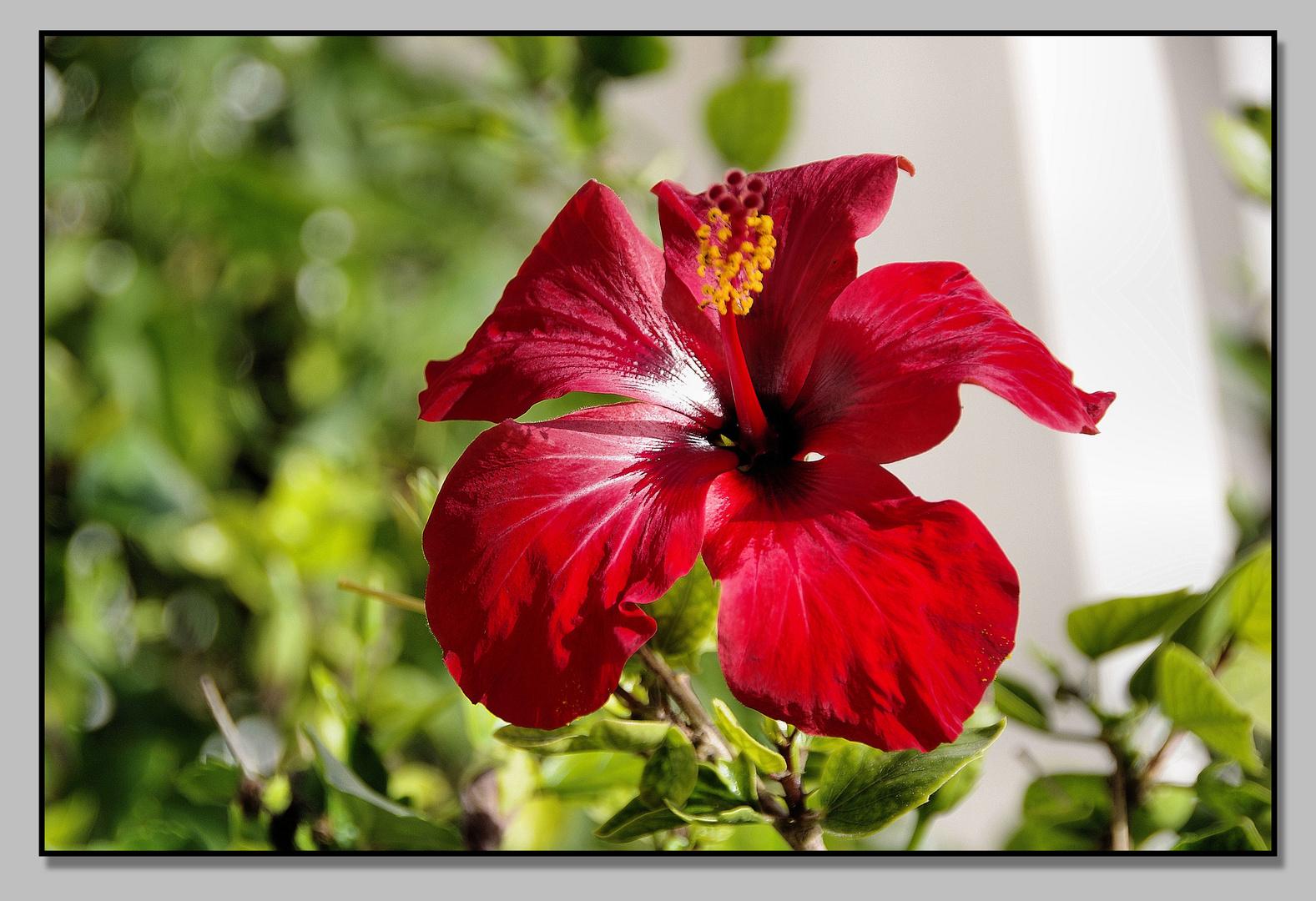 mit dieser Blume